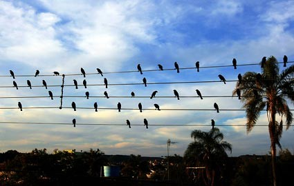 birds-on-a-wire-425ds091609.jpg
