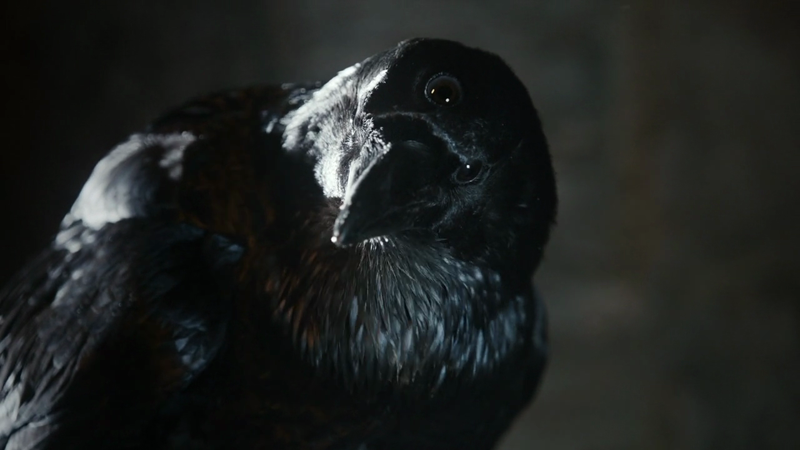 got-three-eyed-crow