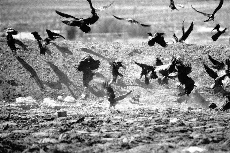 ravens-trash